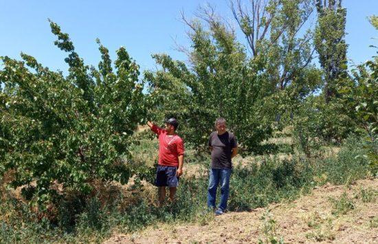 Садоводство — работа тяжелая, но доставляет удовольствие