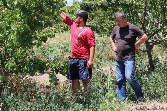 Фермер из села Прис превратил абрикосовые плантации в прибыльный бизнес
