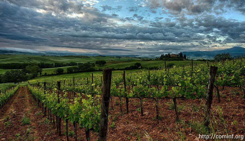 «Винодельня Иронсан» готова принимать виноград от югоосетинских фермеров